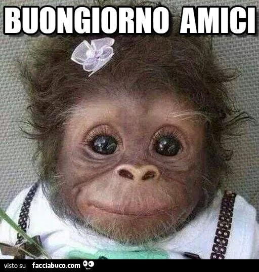 Scimmietta sorridente buongiorno amici for Foto buongiorno amici