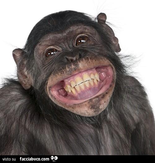 Scimmia che ride