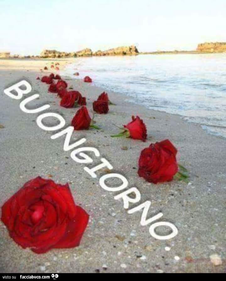Rose in riva al mare buongiorno for Foto di rose bellissime