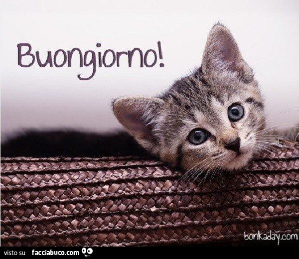 Buongiorno Dal Gattino Condiviso Da Pierrot Facciabuco Com